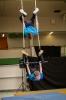 Zirkus-_5